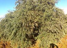 قطعة أرض مميزه مساحة 6,5 دونم في إربد/سمر (بني كنانه) للبيع