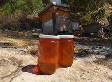 عسل شوكيات طبيعي 100%