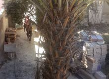 Natural and Artificial Plants is available for sale directly from the owner