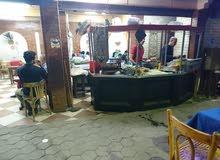 كافي شوب للايجار مفروش كامل بالتجهيزات بشارع رئيسي في الهرم
