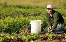 مطلوب فورًا عمال زراعة لفندق خمس نجوم في شرم الشيخ