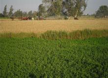 قطعه ارض زراعية مساحه 50 فدان قابلة للتجزئة