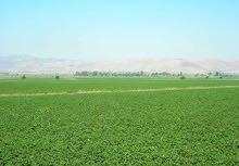 ارض زرعيه للبيع ارض للبيع