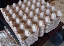 اطباق بيض كرتونية