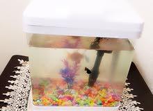 حوض سمك بفلتر مع ثلاث اسماك