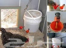 » سقايات اتماتيك لدجاج والطيور بجميع انواعها .