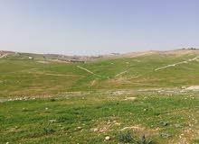 أرض للبيع في شفا بدران زينات الربوع مستوية