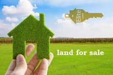 قطعه ارض 10 دونم للبيع في دابوق