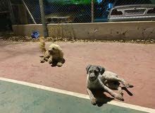 Adopt Dog for free