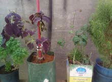 own a New Natural and Artificial Plants at a special price