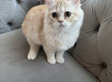 4 month old female cat