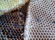 عسل طبيعي بلدي   خلطات علاجية