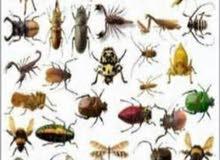 ابو راشد لرش المبيدات الحشريه ومكافحة جميع انواع القوارض