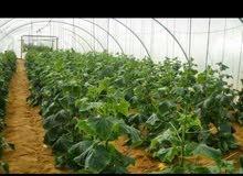 مزارع ارض