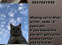 قط مفقود
