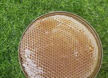 يتوفر العسل الحضرمي والسدر الجبلي والزهور الجبلي والسمر المعتق