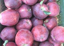 كميات من تفاح للبيع 100طن