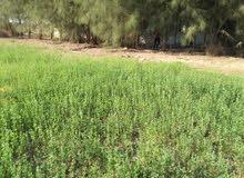 ارض زراعية للبيع بطريق اسيوط الغربي تابعه لمحافظه الجيزه والفيوم