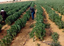 منتجع زراعي للتقسيم للبيع