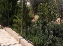 في منطقه حي الزواهره بلقرب من دوار خميس