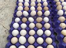 للبيع بيض دجاج محلي