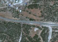 نص هكتار بمنطقة راس الهلال