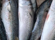 اسماك عمان المجمدة