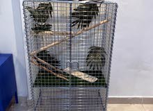 cage for lizards and birds
