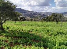 جرش العقاريه بيع وشرا  اراضي ومزارع  اصلاح ارضي تشيك مزارع