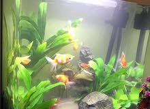 حوض اسماك جاهز بس حط نوع السمك المفضل عندك