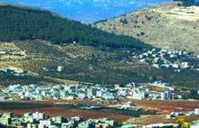 أرض للبيع عين الباشا-ام الدنانير