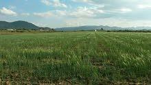 ارض للبيع بين دريوش تيزضوضين