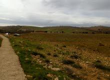 اربع دنم شرق جرش في منطقة نادره عاليه ومرتفعه بسعر مغري