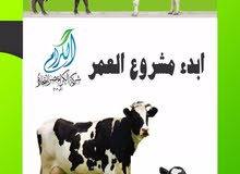 مشروعك مع الكرام مصر
