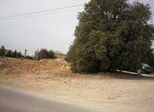 ارض للبيع في دابوق حصلون الشرقي