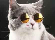 نظاره قطط