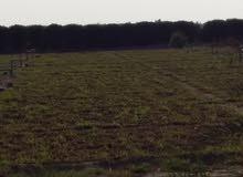 مزرعه للبيع بالعبدلي