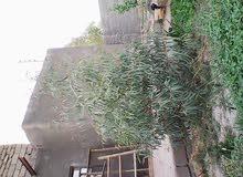 بيت للبيع في كرمة علي
