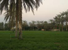 مزرعة مزروعة بها رشاشات يمكن عمل استراحة بها بولاية صحم + مزرعتين فضا