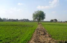 ارض مساحتها 30 فدان للبيع قابلة للتجزئة حتى 2 فدان