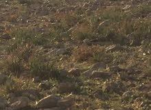 قطعة ارض للبيع في شفا بدران زينات الربوع حوض المكمان