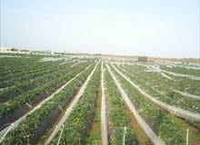 ارض للبيع دعوة لكل من يهتم بالزراعة 90 فدان للبيع قابل لتجزئة