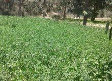 مزرعة 18 فدان بالصالحية - طريق الإسماعيلية