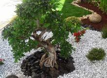 تتسيق وزراعة جميع انواع الاشجار