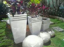 شركة جرين جاردن لتوريد وصيانة نباتات الزينة