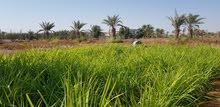 مزرعة للاستثمار طويل المدى في الشارقة