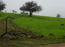 مطلوب اراضي في سلطنة عمان