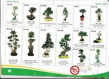 اشجار زينة طبيعية