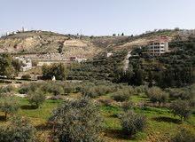 أرض للبيع في الأردن بسعر مغري جدا ولا يعوض