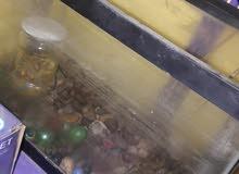 حوض سمك عدد 3